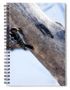 Downy Woodpecker Home Spiral Notebook