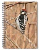 Downy Woodpecker In Brush Spiral Notebook