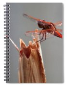 Dragon Fly- Br Spiral Notebook