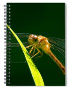 Dragon Fly On Grass Spiral Notebook