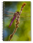Dragon Fly Or Not Spiral Notebook