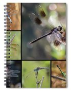 Dragonflies On Twigs Collage Spiral Notebook