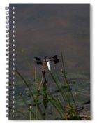 Dragonfly 8 Spiral Notebook