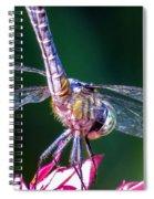 Dragonfly Close Up Spiral Notebook