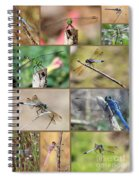 Dragonfly Collage 3 Spiral Notebook