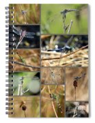Dragonfly Collage Spiral Notebook