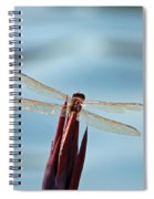 Dragonfly Days Spiral Notebook