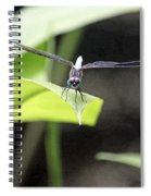 Dragonfly Dimensions Spiral Notebook