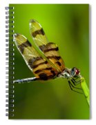 Dragonfly Eating Spiral Notebook