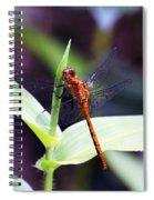 Dragonfly Hunt Spiral Notebook