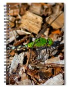 Dragonfly In Mulch Spiral Notebook
