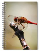 Dragonfly Light Spiral Notebook