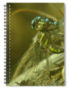 Dragonfly Macro  Spiral Notebook