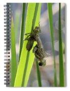 Dragonfly Metamorphosis - First In Series Spiral Notebook