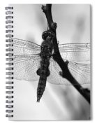 Dragonfly Mosaic Spiral Notebook