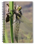 Dragonfly Newly Emerged - First In Series Spiral Notebook
