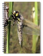 Dragonfly Newly Emerged - Third In Series Spiral Notebook