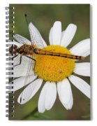 Dragonfly On A Daisy Spiral Notebook