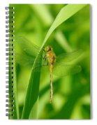 Dragonfly On A Grass Stem Spiral Notebook