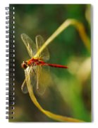 Dragonfly On A Summer Day Spiral Notebook