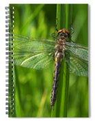 Dragonfly On Grass Spiral Notebook