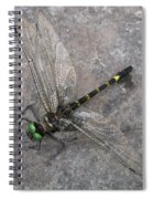 Dragonfly On Rock Spiral Notebook