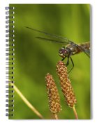 Dragonfly On Seed Pod 2 Spiral Notebook