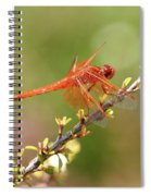 Dragonfly Resting Spiral Notebook