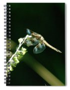 Dragonfly Resting In The Wind  Spiral Notebook