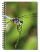 Dragonfly Square Spiral Notebook
