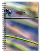 Dragonfly Walking A Tightrope Spiral Notebook