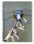 Dragonfly Wing Details II Spiral Notebook