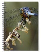 Dragonfly Wing Details Spiral Notebook