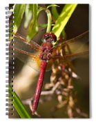 Dragonfly Wings Spiral Notebook