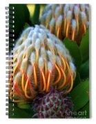Dramatic Protea Flower Spiral Notebook