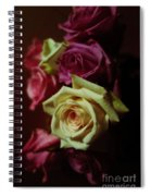 Dramatic Purple And Yellow Roses Spiral Notebook