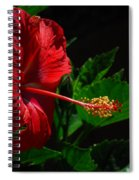 Dramatic Red Hibiscus Spiral Notebook