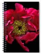 Dramatic Red Peony Flower Spiral Notebook