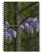 Draping Wisteria Frutescens Wildflower Vines Spiral Notebook