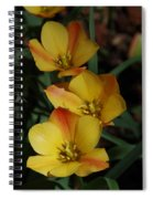 Dreaming Spiral Notebook
