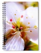 Dreamy Cherry Blossom Spiral Notebook
