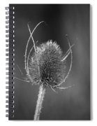 Dried Common Teasel Spiral Notebook