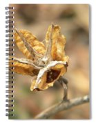 Dried Seed Spiral Notebook
