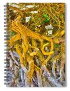 Queen Mariana's Driftwood Spiral Notebook