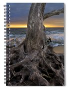 Driftwood On Jekyll Island Spiral Notebook