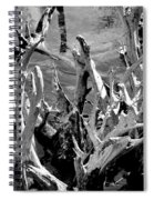 Driftwood On Lost Lake Spiral Notebook