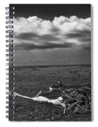 Driftwood On The Beach At Whitefish Point Spiral Notebook