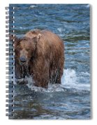 Dripping Grizzly Spiral Notebook
