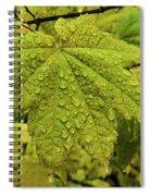 Dripping Vine Maple Spiral Notebook