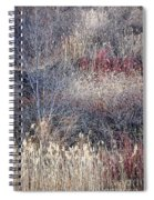 Dry Grasses And Bare Trees Spiral Notebook